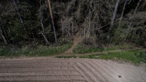 Trailwald009-scaled