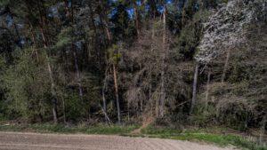 Trailwald012-scaled