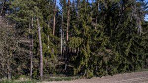 Trailwald013-scaled