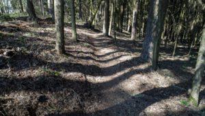 Trailwald015-scaled