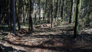 Trailwald016-scaled