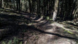 Trailwald017-scaled