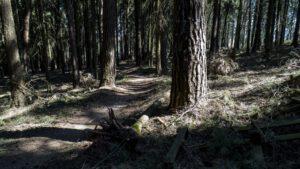 Trailwald019-scaled