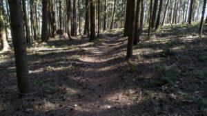 Trailwald020-scaled