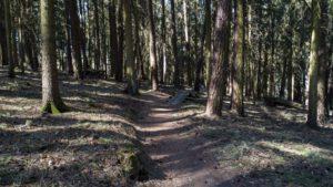Trailwald023-scaled