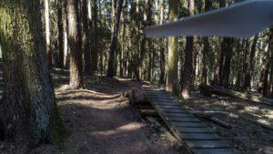 Trailwald024-scaled