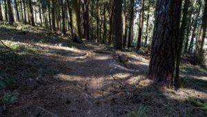 Trailwald026-scaled