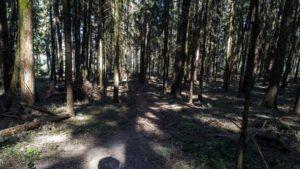 Trailwald027-scaled