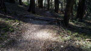 Trailwald028-scaled