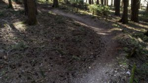 Trailwald029-scaled