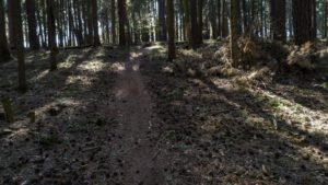 Trailwald030-scaled