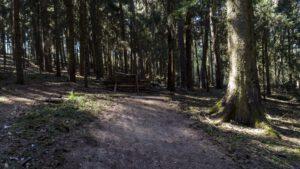 Trailwald032-scaled