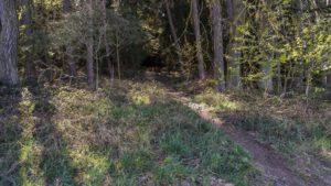 Trailwald035-scaled